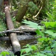Kass Creek Project