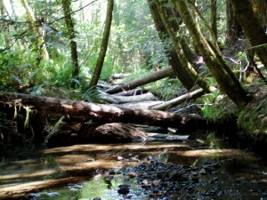 kass creek project